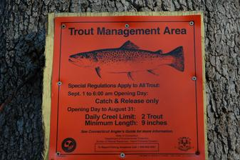 Trout Management Area regulations for fly fishing on the Saugatuck River in Westport Connecticut